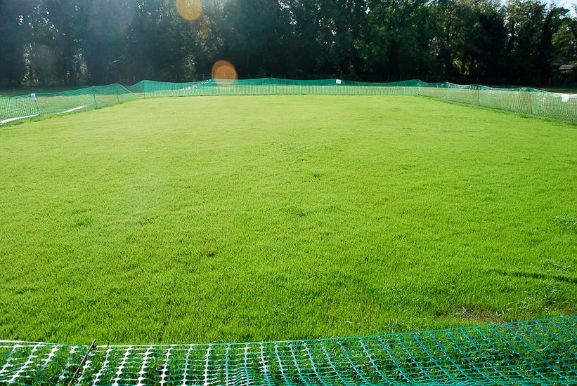 cricket-025