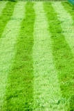 cricket-032