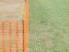 cricket-017