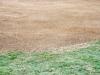cricket-021