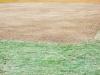 cricket-022